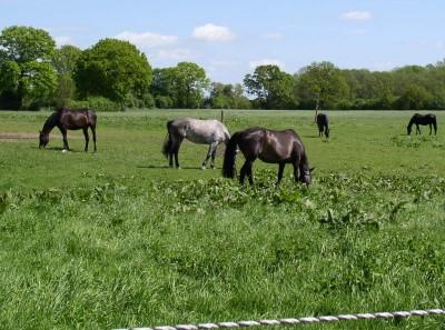 Pferdekoppel bei Hammoor