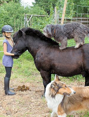 Ponys Pension Hammoor
