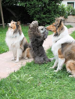 Hunde Pension Hammoor