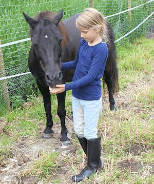 Pony in Hammoor